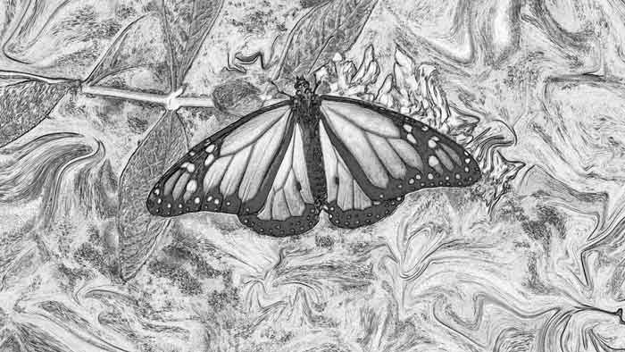 Butterfly from the Dark