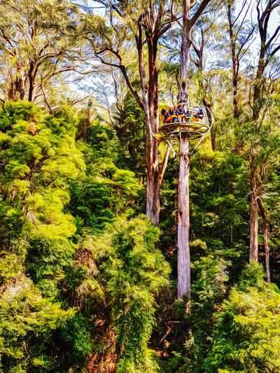 Zipline at Illawarra Fly Treetop Adventures