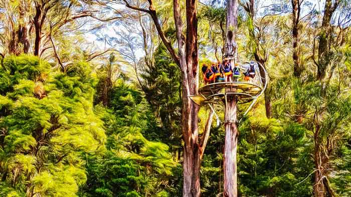 Illawarra Fly Treetop Adventures Experience