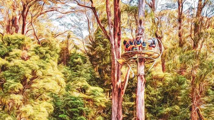 Illawarra Fly Treetop NSW Roadtrip