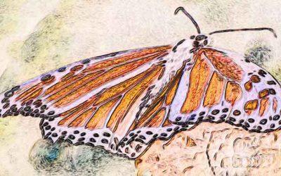 Transform Butterfly thru Change