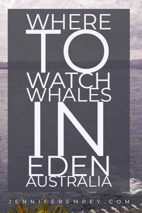 Whale Watching in Eden Pin