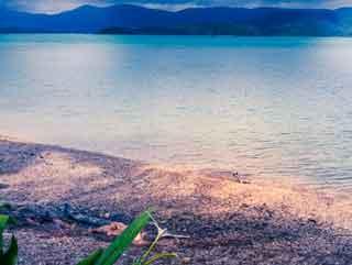 Kangaroo sleeps at Daydream Island