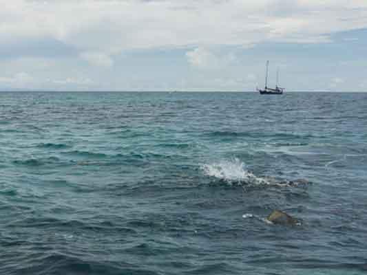 Marine life & boat at Green Island