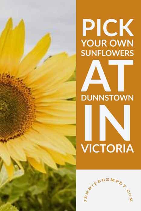 Sunflower Field Pin